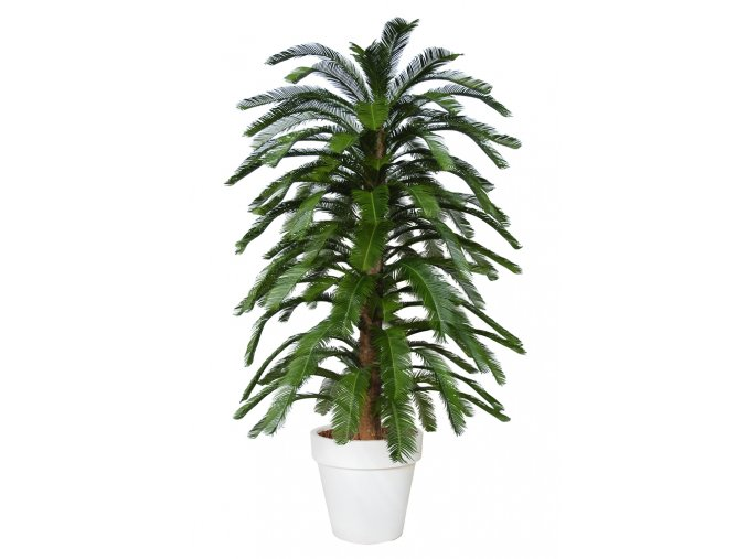 Cycas Florida 230 cm Green V4222A16
