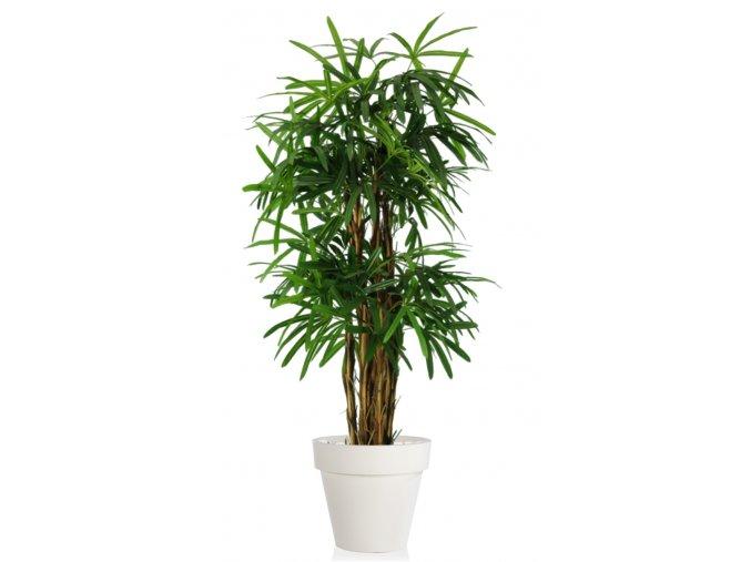 Raphis Palm 150 cm Green V5548GRN