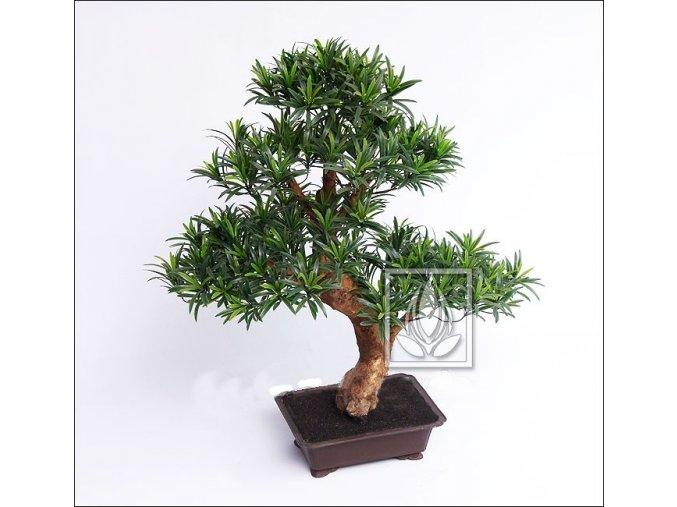 Umělá bonsai Podocarpus (80cm)