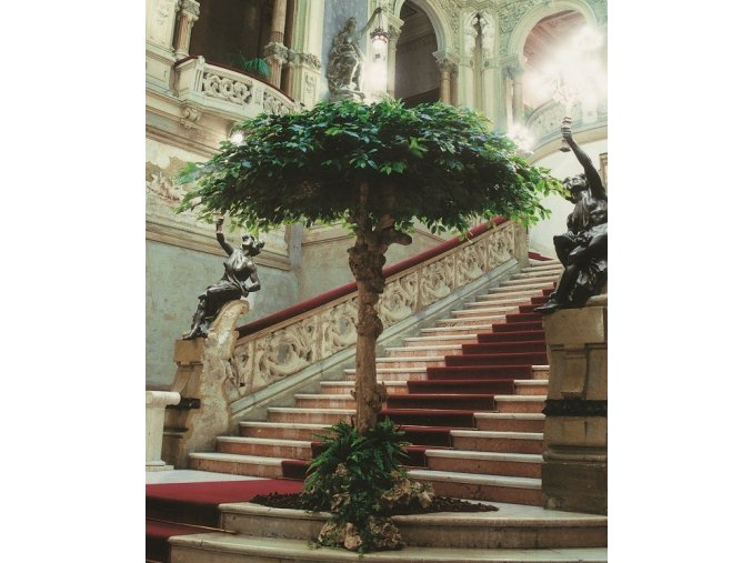 Umělý strom Fikus Exotica Umbrella (Varianta 420cm)