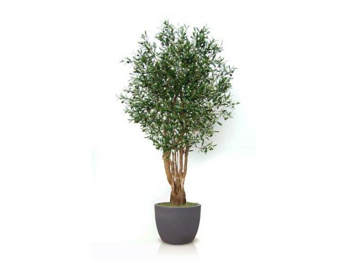Umělý strom Olive Malabar (Varianta 220cm)