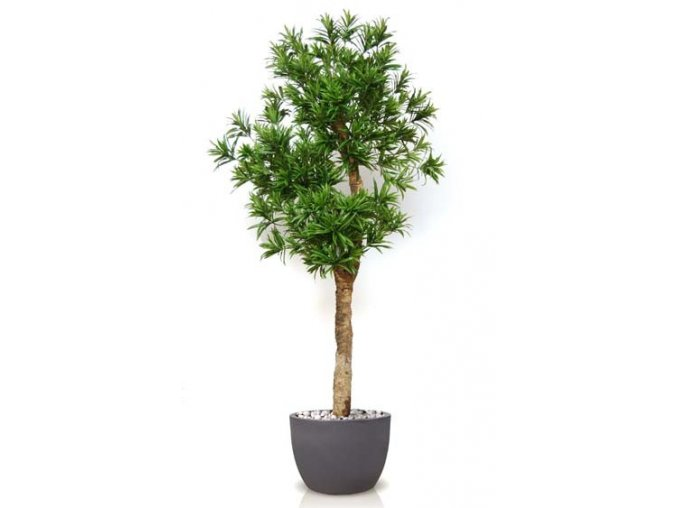 Umělý strom Dracaena Reflexa Drago (280cm) zelená  dracena