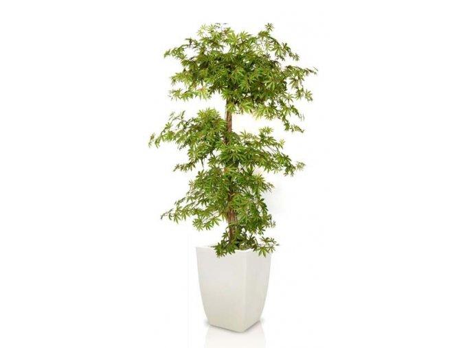 Umělý strom Maple Multistep (Varianta (220cm) multicolor)