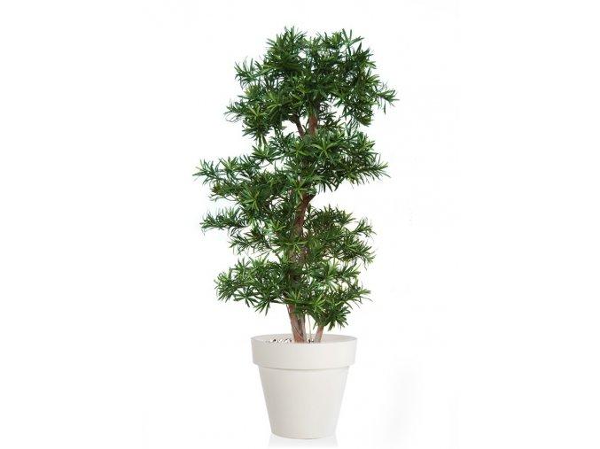 Umělý strom Podocarpus Multistep (Varianta 220cm)