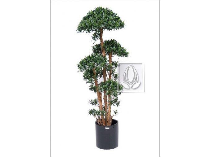 Umělý strom Podocarpus Tempel (180cm)