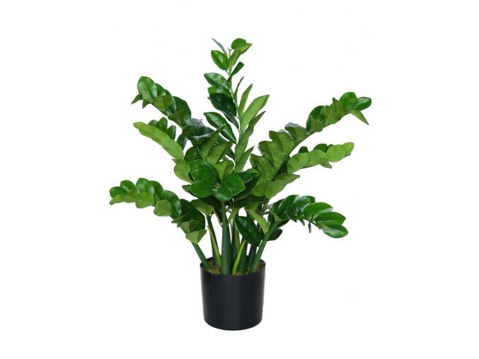 Zamiifolia Robusta w pot 90 cm Green 5501GRN