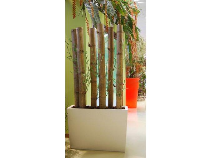 Umělý strom Bambus Jumbo x6 (200cm)