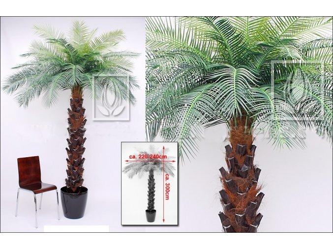 Umělá palma Pindo (300cm)