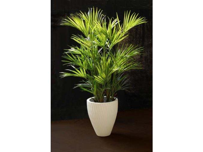 Umělá palma Kentia Palm Lux x3 (200cm)