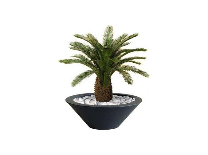 Umělá palma Cycas Baby Fat  (70cm)