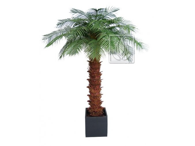 Umělá palma Olejná (Varianta 240cm)