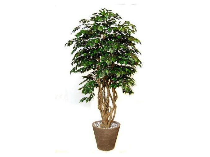 Umělý strom Fikus Exotica Malabar Lux (250cm)