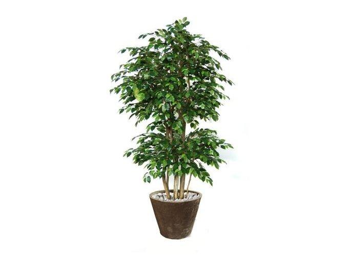Umělý strom Fikus Exotica Boschetto (Varianta 220cm)