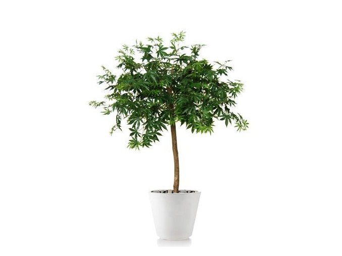 Umělý strom Maple Topiary (120cm) zelený  javor