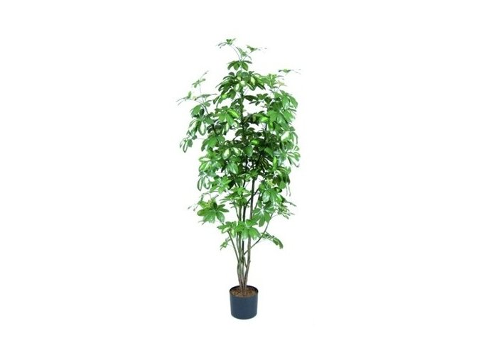Umělý strom Schefflera (Varianta 150cm)