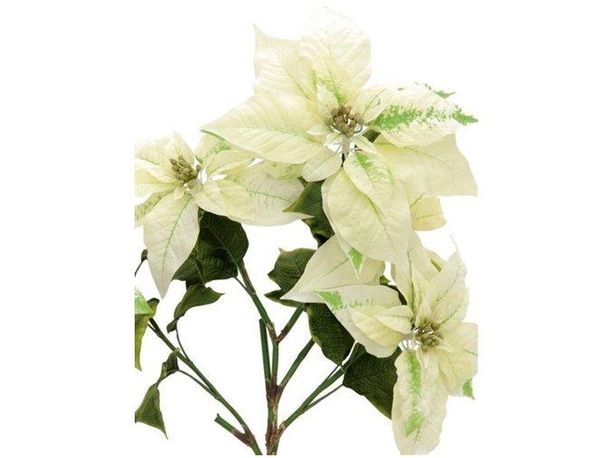 Umělá květina Poinsetia (60cm) krémová