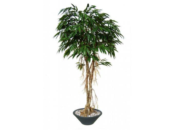 Umělý strom Longifolia Mash Root (220cm)