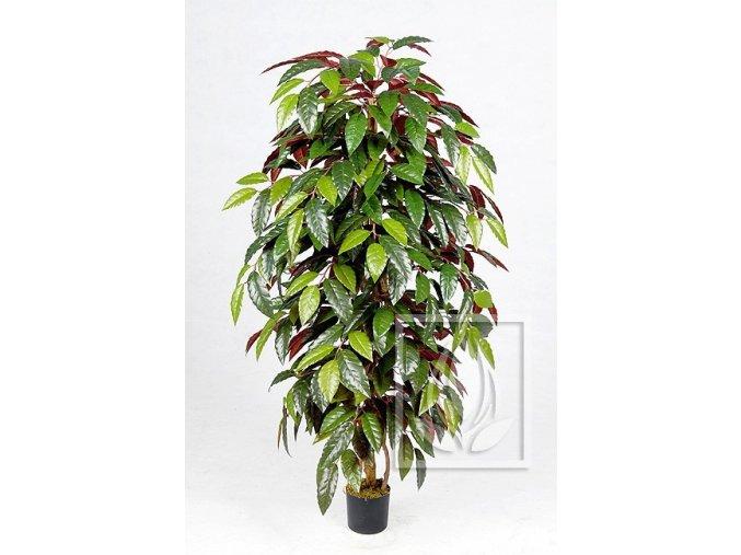 Umělý strom Fikus Capensia (Varianta 210cm)