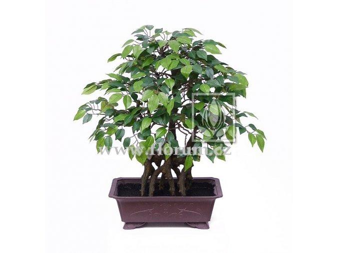 Umělá bonsai Fikus Wide (55cm)