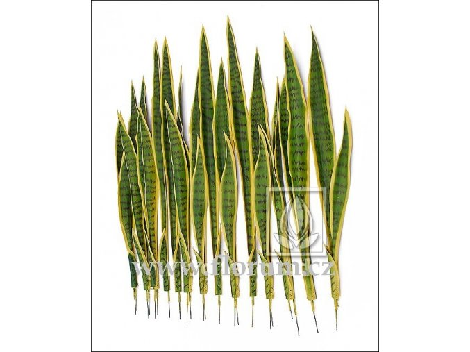 Umělá rostlina Sansevieria (80cm)  tchynin jazyk