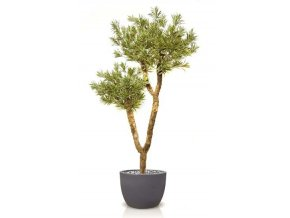 Umělý strom Dracaena Reflexa Drago (220cm) vario  dracena
