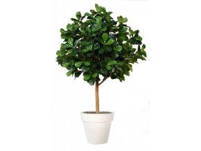 Umělý strom Fikus Lyrata Gigantea (280cm)