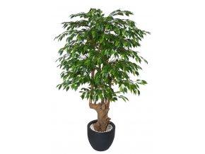 Umělý strom Ficus Golden Malabar (Varianta 150cm)