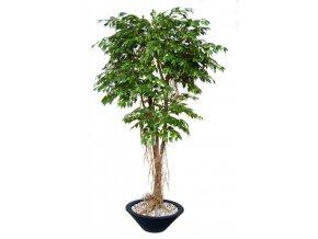 Umělý strom Fikus Golden Mash Root (220cm) (Barva listů zelená)