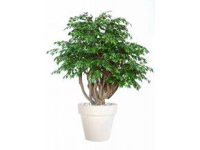 Umělý strom Fikus Golden Robusta (170cm) (Barva listů zelená)
