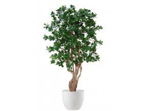 Umělý strom Ficus Panda Malabar (Varianta 150cm)