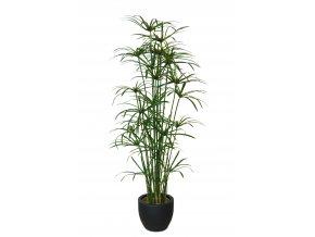 Papyrus Royal 170 cm Green V5409GRN