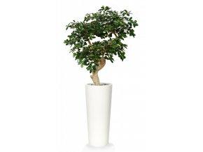 Umělý strom Buxifolia Crown (150cm)
