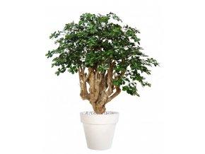 Umělý strom Buxifolia Robusta (170cm)