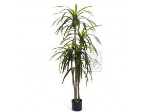 Umělá rostlina Dracena (155cm)