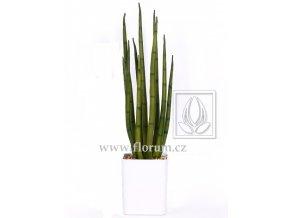 Umělá rostlina Sansevieria Cylindrica (55cm)