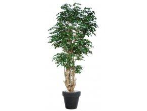 Ficus Exotica Malabar Lux 350 cm Green V1049053