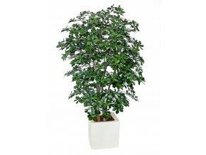 Umělý strom Buxifolia Boschetto (180cm)