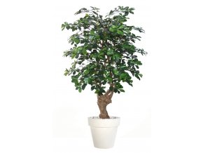 Umělý strom Buxifolia Malabar  150, 180, 220cm