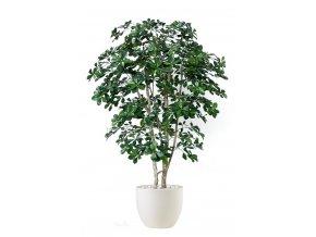 Umělý strom Buxifolia Natural Style (180cm)