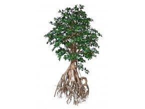 Umělý strom Buxifolia Root Giant (250cm)