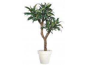 Umělý strom Cordyline Drago (220cm)  dračinka