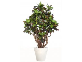 Umělý strom Croton Robusta (170cm)  kroton