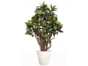 Umělý strom Croton Robusta (170cm)  multicolor