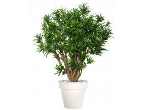 Umělý strom Dracaena Reflexa Robusta (170cm)  dracena