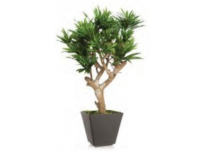 Umělý strom Dracaena Reflexa Robustina (90cm)  dracena