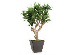 Umělý strom Dracaena Reflexa Robustina (90cm)  zelená