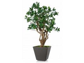 Umělý strom Fikus Panda Robustina (90cm)