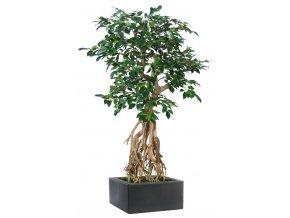 Umělý strom Fikus Retusa Root mini (130cm)