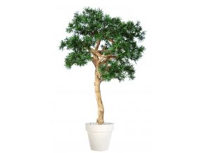 Uměly strom Podocarpus Nidra (250cm)  nohoplod
