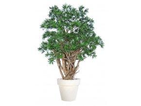 Uměly strom Podocarpus Robusta (170cm)  nohoplod